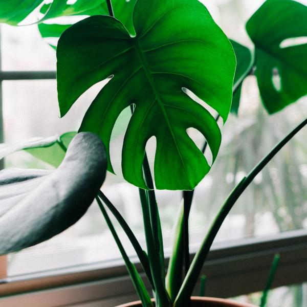 vloer-plant