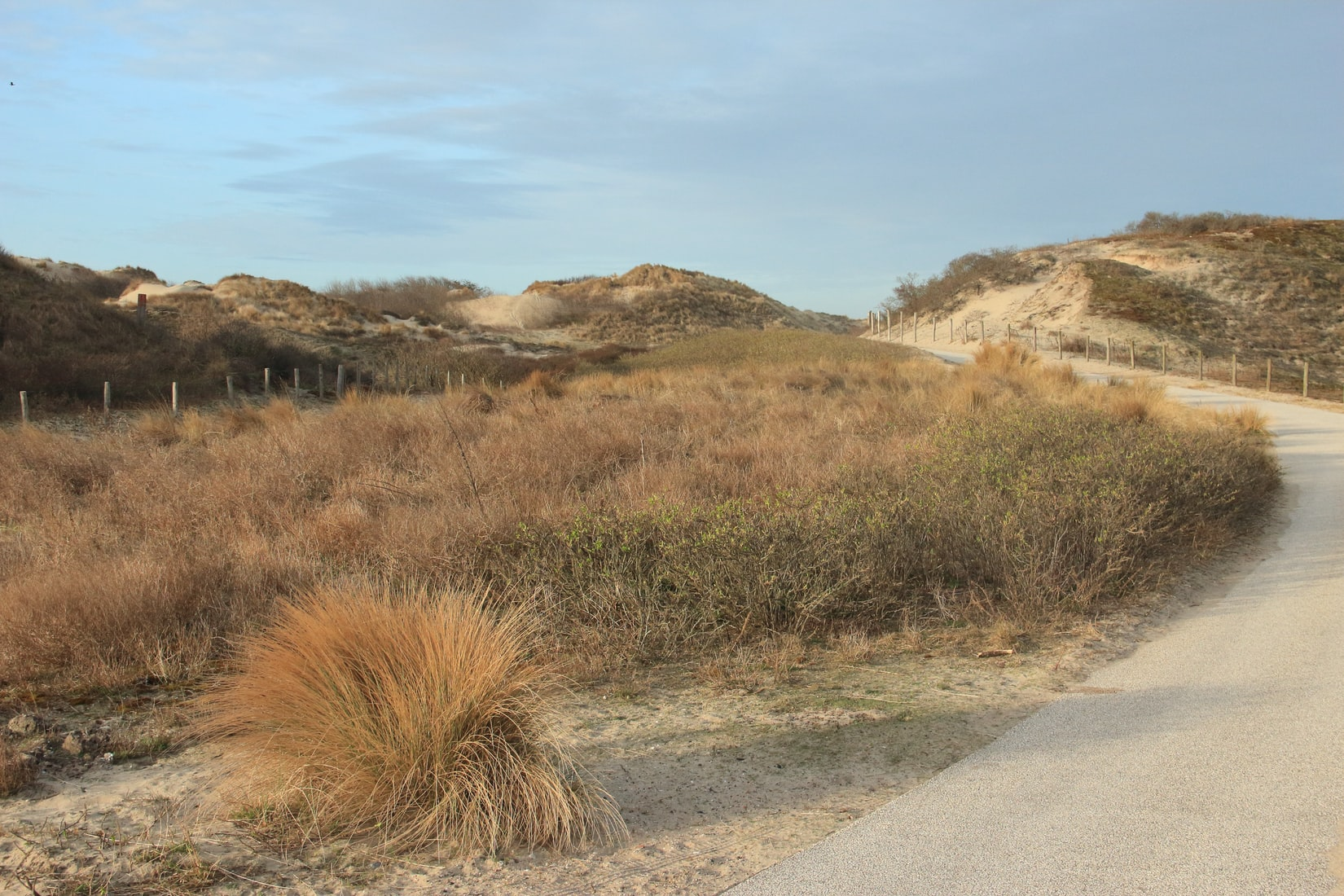 Scheveningen-duinen