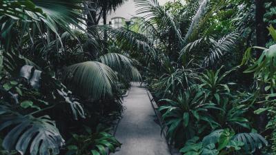 tuin-pad-groene-planten