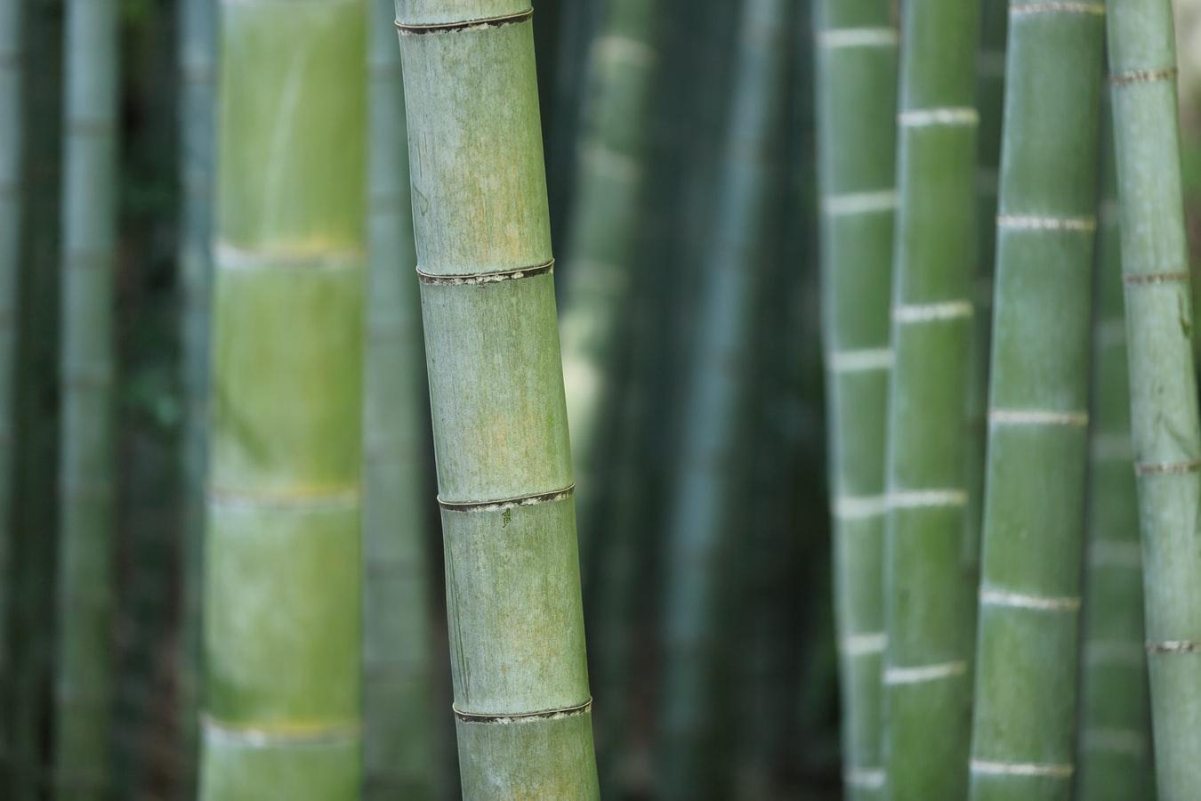 bamboe-stokken