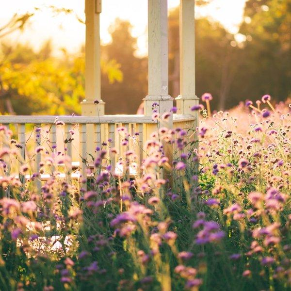 bloemen-hek-tuin